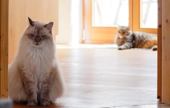 Картинка кошки, дом, в ссоре