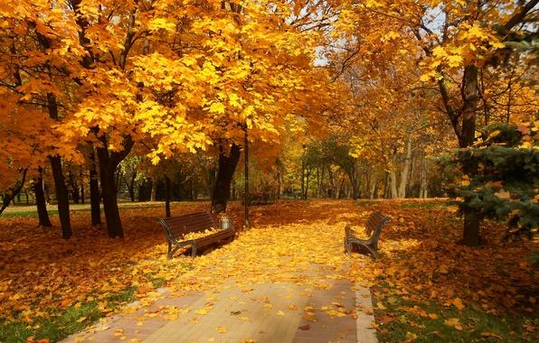 Заставки на рабочий стол скачать бесплатно осень золотая