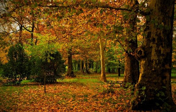 Картинка осень, листья, деревья, природа, парк, фото, ствол, Испания, Madrid, Campo