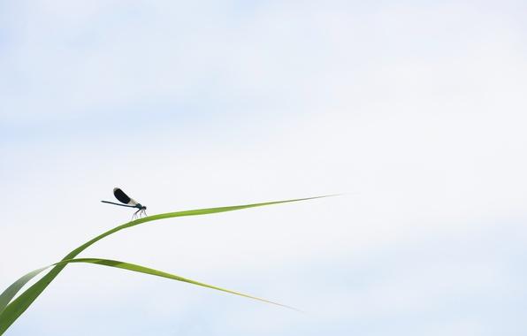 Картинка трава, природа, насекомое
