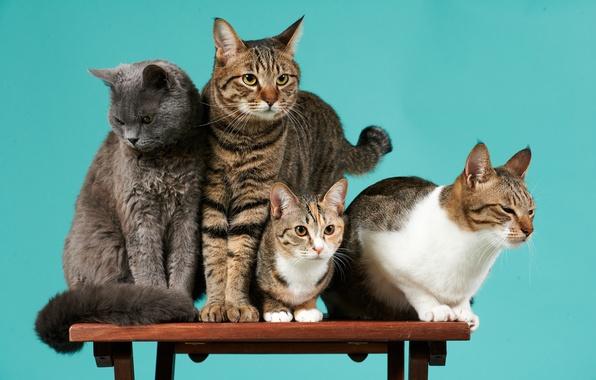 Картинка кошки, фон, компания