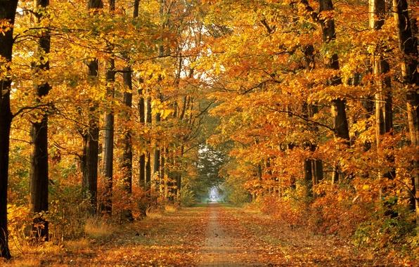 Картинка дорога, осень, лес, деревья, природа, осенняя пора