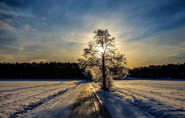 Картинка зима, дорога, дерево, утро