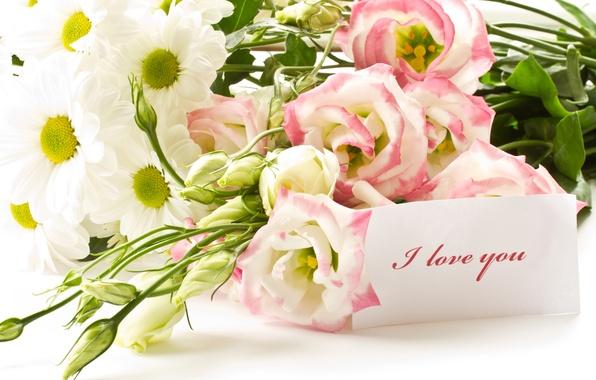 Картинка цветы, букет, daisies, daisy, любить