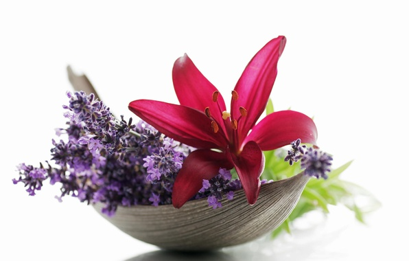 Картинка макро, цветы, лилия, лаванда