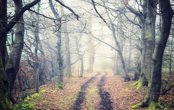 Картинка дорога, осень, лес, листья, деревья, природа, туман, тропа