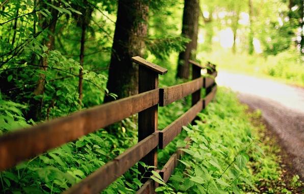 Картинка зелень, листья, макро, деревья, природа, фон, дерево, widescreen, обои, забор, ограда, ограждение, дорожка, wallpaper, листочки, …