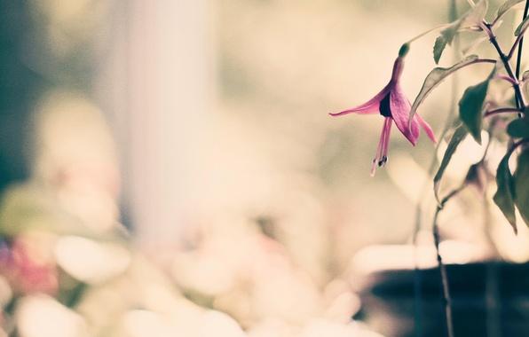 Картинка цветок, листья, макро, цветы, фон, розовый, widescreen, обои, размытие, лепестки, wallpaper, flower, широкоформатные, background, полноэкранные, …