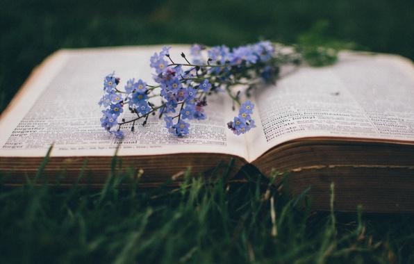 Картинка макро, цветы, книга