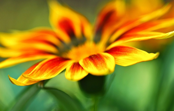Картинка макро, цветы, оранжевый, желтый, зеленый, фон, widescreen, обои, размытие, лепестки, лепесток, wallpaper, широкоформатные, background, macro, …