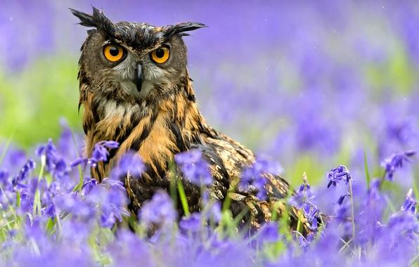 Картинка цветы, дождь, сова, птица, весна, Филин