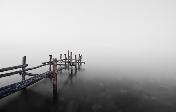 Цветы в тумане фото