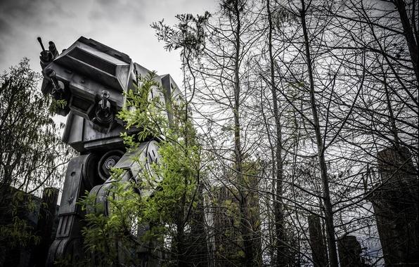 Картинка лес, робот, большой, star wars, боевой, photo, photographer, Greg Stevenson, звездные воины