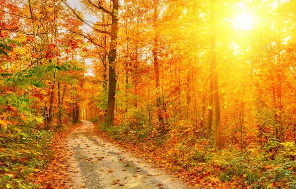 Картинка лучи, свет, Природа, Осень, Деревья, Листья, Дороги, Леса