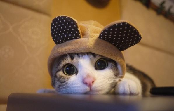 Картинка kitten, cat, cute