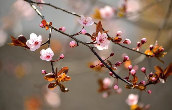 Картинка деревья, ветки, цветочки, trees, flowers, соцветия, branches, buds