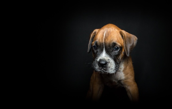 Картинка фон, друг, черный, собака, щенок