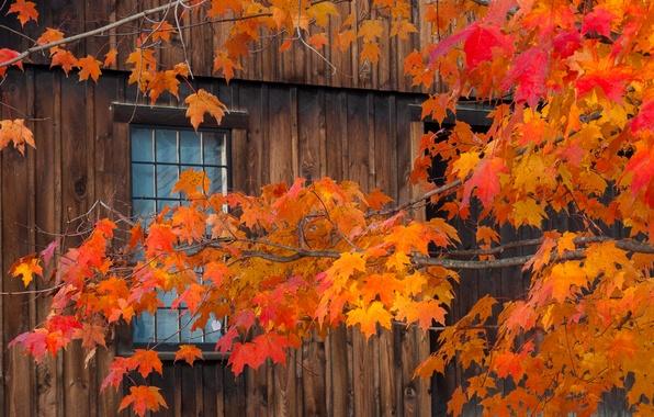 Картинка осень, листья, дом, ветка, окно
