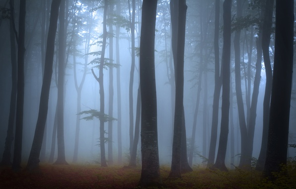 Картинка лес, деревья, пейзаж, природа, туман