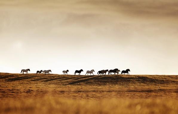 Картинка природа, кони, табун