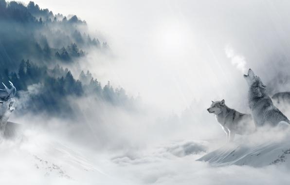 Картинка холод, зима, лес, снег, деревья, туман, хищники, стая, олень, арт, волки, охота, добыча