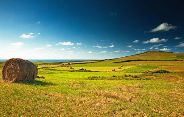 Картинка поле, небо, облака, пейзаж, стог, горизонт, луг, сено, зелёное, синее, Green, field, landscape, village, meadow, …