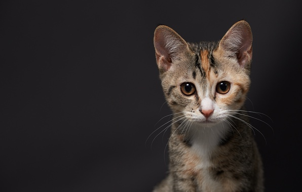 Картинка кот, котенок, фон, мордочка