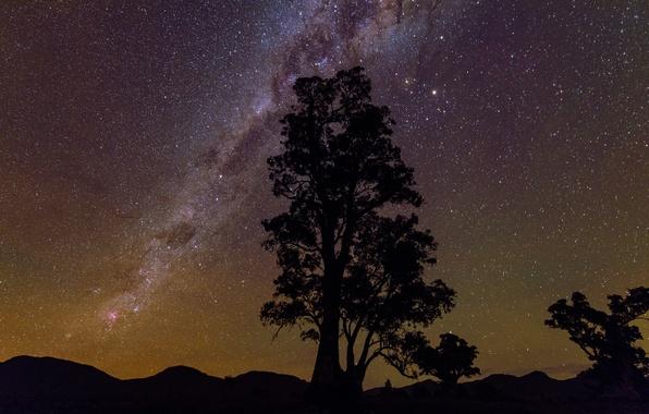 Картинка звезды, дерево, красота, силуэт, млечный путь