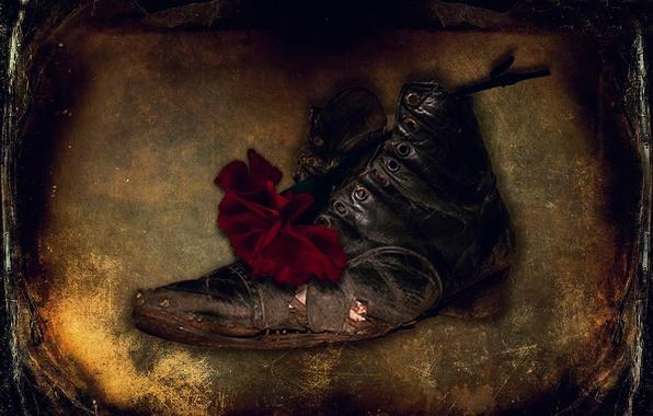 Картинка цветок, текстура, царапины, ботинок