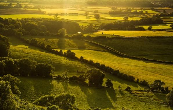 Картинка зелень, поле, свет, деревья, пейзаж, природа, холмы, Англия, вечер, Великобритания, England, Great Britain, Hassocks