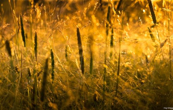 Картинка трава, солнце, макро, свет, природа, grass, nature, macro, 2560x1600, sunlight
