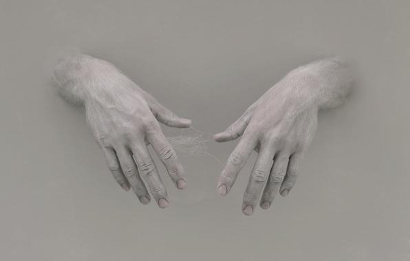 Картинка фон, паутина, руки