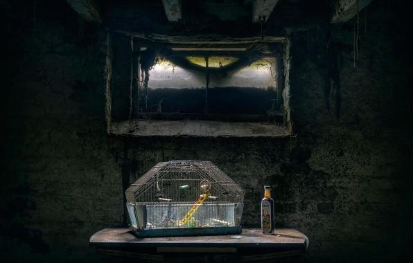 Картинка стол, стена, паутина, клетка, окно