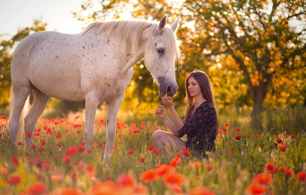 Картинка лето, девушка, конь, маки