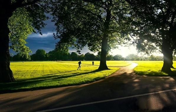 Картинка зелень, небо, трава, солнце, деревья, пейзаж, природа, фон, движение, widescreen, обои, листва, человек, тень, луг, …