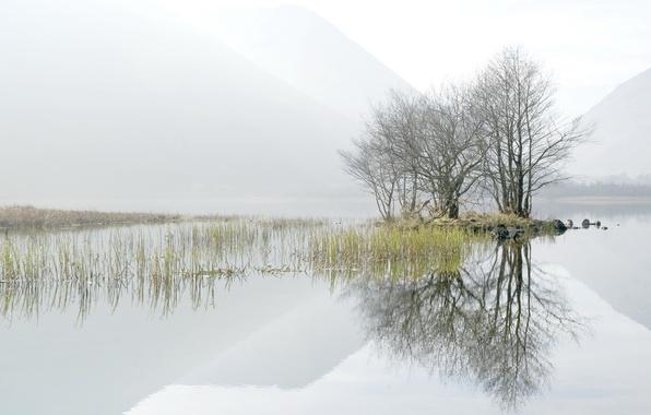 Картинка деревья, пейзаж, туман, озеро, утро