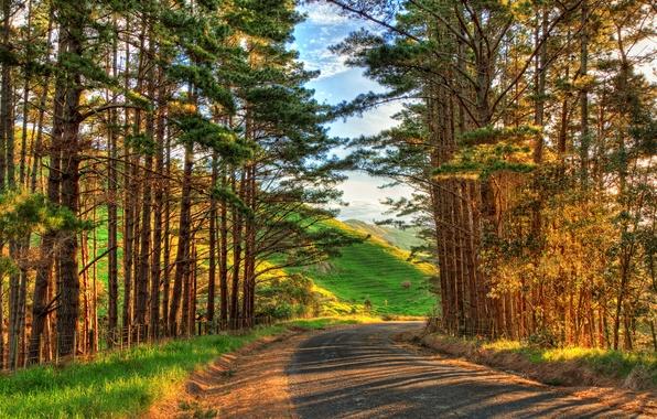 Картинка дорога, небо, трава, облака, деревья, пейзаж, закат, цветы, горы, природа, путь, восход, дерево, пейзажи, HDR, …