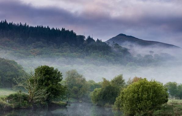 Картинка лес, горы, туман, озеро, утро, дымка