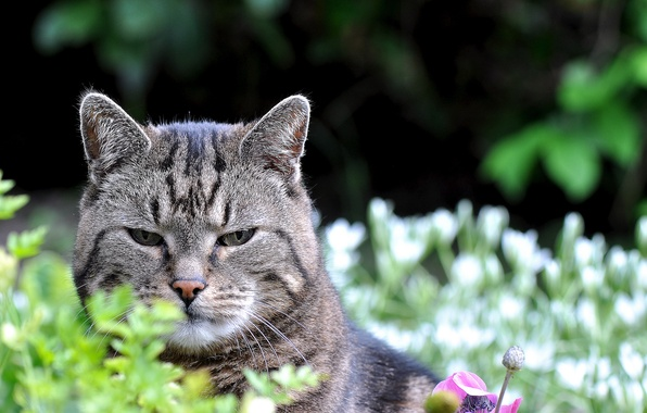 Картинка кот, взгляд, природа, котэ
