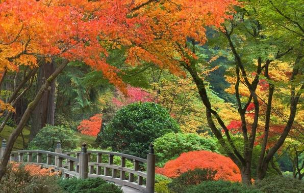 Картинка осень, деревья, парк, Япония, мостик, кусты