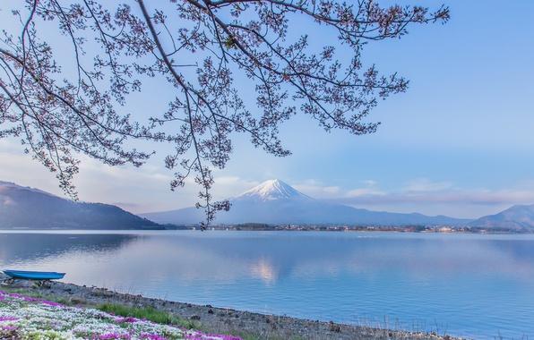 Картинка цветы, ветки, озеро, лодка, гора, вулкан, Япония, Фудзи, Japan, Mount Fuji, Фудзияма, Lake Kawaguchi, озеро …
