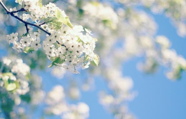 Картинка небо, цветы, дерево, весна, цветение