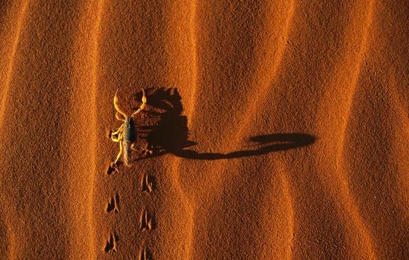 Песок тень следы обои фото картинки