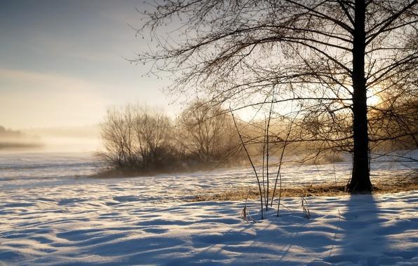 Картинка зима, небо, трава, солнце, снег, восход, дерево, утро, мороз, пар, тени, дымка, кусты, winter, холодно, …