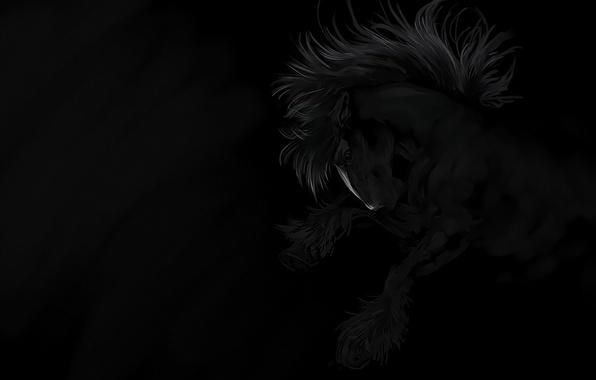 Картинка свобода, ночь, конь, ветер