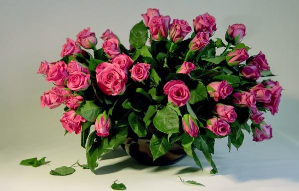Картинка цветок, любовь, цветы, природа, праздник, роза, чувства, розы, красота, букет, лепестки, красиво, розовые, бутоны, красивые, …