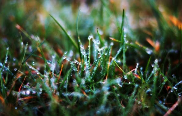 Картинка трава, капли, макро, роса, травинки