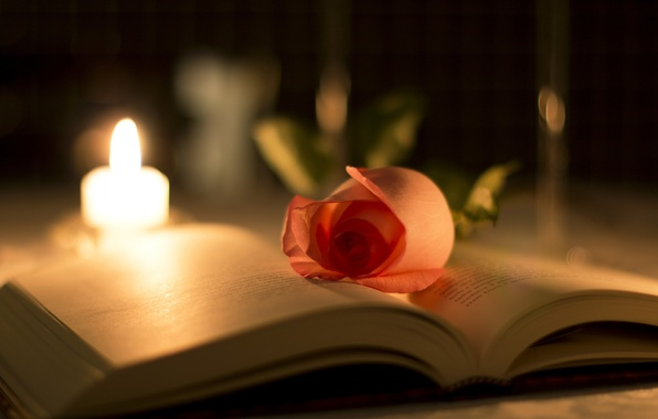 Картинка цветок, макро, свет, блики, роза, свеча, размытие, лепестки, книга