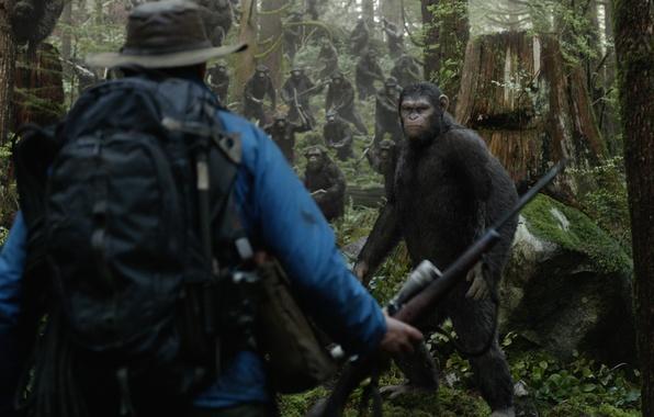 Картинка лошадь, обезьяна, Планета обезьян: Революция, Dawn of the Planet of the Apes
