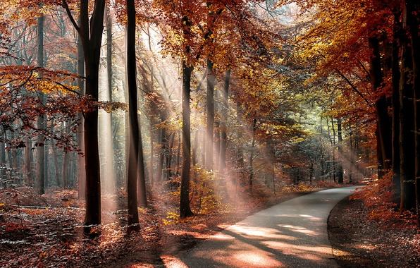Картинка осень, лес, листья, солнце, деревья, парк, путь, тени